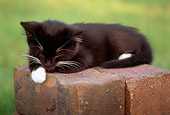 CAT 03 GR0809 02