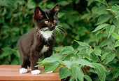 CAT 03 GR0816 01