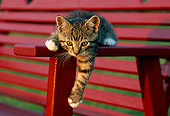 CAT 03 GR0821 01