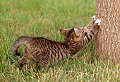 CAT 03 GR0822 01