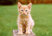 CAT 03 GR0834 01