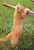 CAT 03 GR0838 01