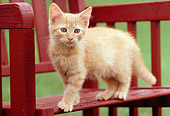 CAT 03 GR0844 01