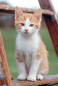 CAT 03 GR0847 01