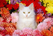 CAT 03 GR0857 01