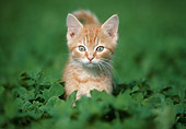 CAT 03 GR0858 01