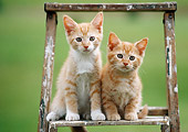 CAT 03 GR0860 01