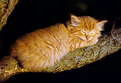 CAT 03 GR0865 01