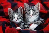 CAT 03 GR0874 01