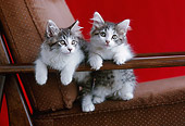 CAT 03 GR0875 01