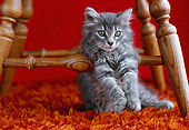 CAT 03 GR0878 01