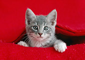 CAT 03 GR0879 01