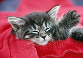 CAT 03 GR0880 01