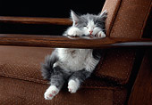 CAT 03 GR0882 01