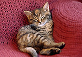CAT 03 GR0886 01