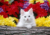 CAT 03 GR0890 01