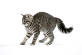 CAT 03 JD0001 01