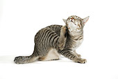 CAT 03 JD0003 01
