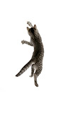 CAT 03 JD0005 01