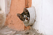 CAT 03 KH0115 01