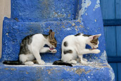 CAT 03 KH0126 01