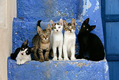 CAT 03 KH0130 01