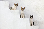 CAT 03 KH0131 01