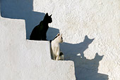 CAT 03 KH0132 01
