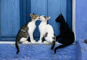 CAT 03 KH0137 01