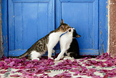 CAT 03 KH0139 01