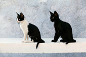 CAT 03 KH0141 01