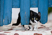 CAT 03 KH0147 01