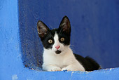 CAT 03 KH0150 01