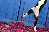 CAT 03 KH0153 01