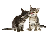CAT 03 KH0155 01