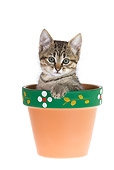 CAT 03 KH0159 01