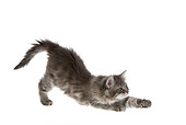 CAT 03 KH0162 01
