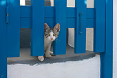 CAT 03 KH0164 01