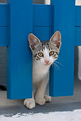 CAT 03 KH0165 01