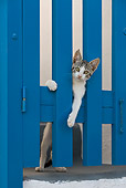 CAT 03 KH0166 01