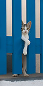 CAT 03 KH0167 01