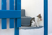 CAT 03 KH0169 01