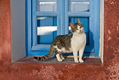 CAT 03 KH0174 01