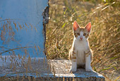 CAT 03 KH0178 01