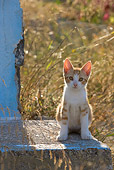 CAT 03 KH0179 01