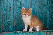 CAT 03 KH0183 01