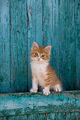 CAT 03 KH0184 01