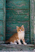 CAT 03 KH0186 01