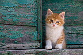 CAT 03 KH0189 01