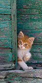 CAT 03 KH0193 01